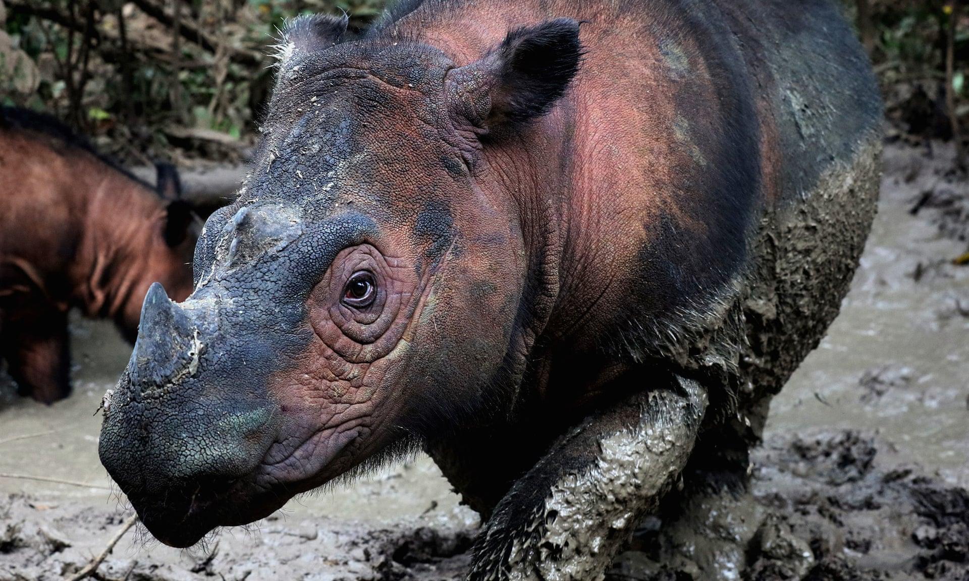 Gli scienziati avvertono, la sesta estinzione di massa delle specie animali sta accelerando