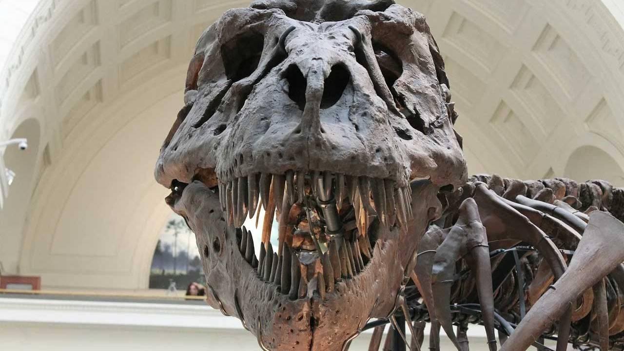 I paleontologi dicono che le estinzioni di massa sulla Terra seguono un ciclo di 27 milioni di anni