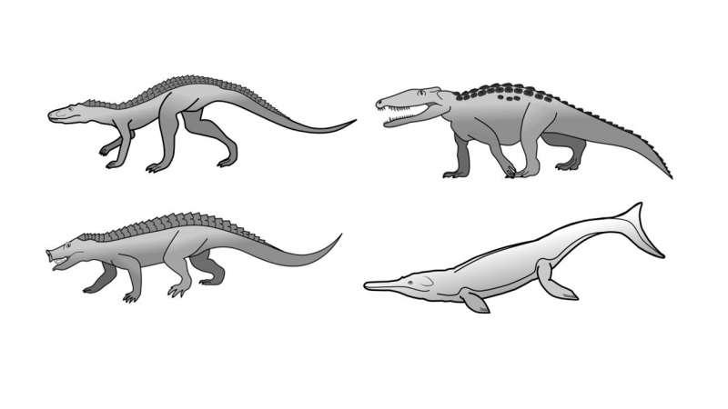 Una ricerca spiega perché i coccodrilli sono cambiati così poco dall'età dei dinosauri
